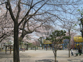 玩具mebiusu的车轮和樱花
