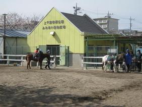 矮种马骑马的照片